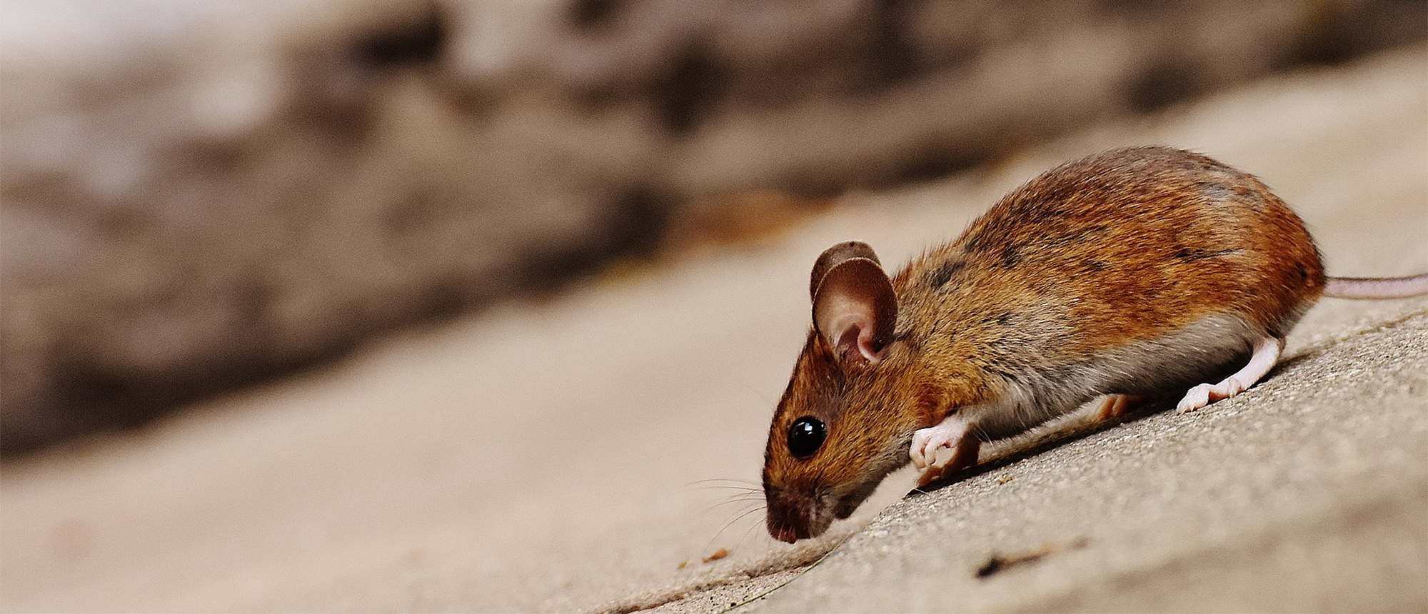 Rodent and Pest Control Information